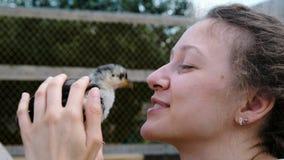 Frau streicht und hält ein kleines Huhn in ihren Händen und wird durch einen Vogel in der Nahaufnahme bewegt stock video footage