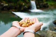 Frau u. x27; s übergibt das Halten des Bündels Erdnüsse in der Natur Stockfotos