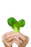 Frau und Gemüse Lizenzfreie Stockfotos