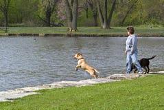 Frau und Hunde am Park Stockfotografie