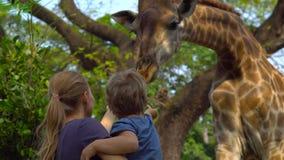 Frau und ihr Sohn ziehen eine Giraffe in einem Safari-Park ein stock footage