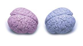 Frau versifiziert Mann-Gehirne stockfotos