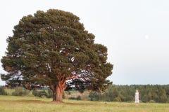 Frau vor dem großen Baum in der Parkweinleseart im Konzept einsam, grüne Erde der alleinnatur Lizenzfreie Stockfotos