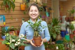 Frau wählt Ficusanlage (Bonsais) stockbilder