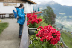 Frau, welche die Blumen bereitsteht Stockbild