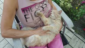 Frau, welche die Katze streicht stock footage