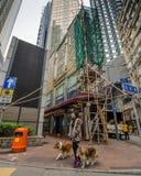 Frau, welche die Straße in Hong Kong mit zwei Hunden kreuzt Stockfotografie