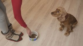 Frau zieht den Hund ein stock video footage