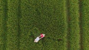 Frau zwei mit dem blonden Haar in einem roten und blauen Kleid, das auf dem Gebiet mit Weizen einkreist stock video footage