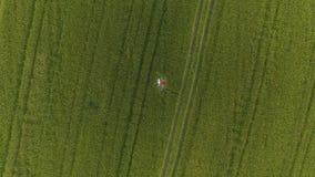 Frau zwei mit dem blonden Haar in einem roten und blauen Kleid liegen auf dem Gebiet mit Weizen stock video footage