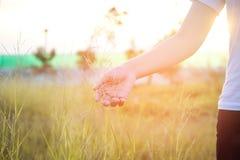 Frauen übergeben rührende Wiesen des grünen Grases Lizenzfreies Stockfoto