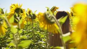 Frauen auf dem Gebiet von Sonnenblumen stock footage