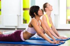 Frauen in der Turnhalle, die Yoga tut, trainieren für Eignung Stockbilder