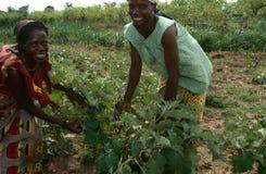 Frauen, die an einem Bauernhof, Uganda arbeiten. stockfoto