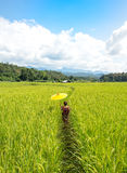 Frauen, die einen gelben Regenschirmweg auf dem grünen Reisgebiet halten Lizenzfreies Stockfoto