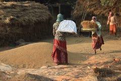 Frauen, die Paddy dreschen stockbild