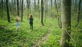 Frauen, die in Wald laufen. Stockbilder
