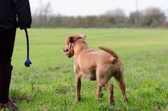 Frauen-gehender Hund Stockbild