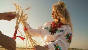 Frauen-Griff-Weizen-Spitzen in den Händen gesprungen durch rote Bänder und Blick an ihnen stock video
