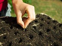 Frauen-Hand, die Samen pflanzt Lizenzfreies Stockfoto