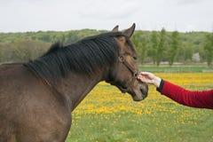 Frauen-Holding-Pferd Lizenzfreies Stockbild
