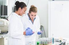 Frauen im Forschungslabor, das über Tests auf Mikrobenproben spricht Stockfotos