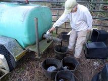 Frauen-Landwirt Pouring Molasses lizenzfreie stockfotos