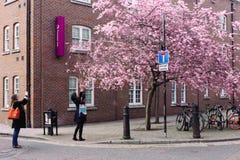 Frauen macht Foto der blühenden Kirsche am Handy Lizenzfreie Stockfotografie