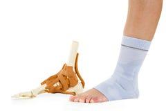 Frauen-menschlicher Fuß in der Knöchel-Klammer und im skelettartigen Modell Stockfoto