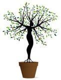 Frauen pflanzen in einem Topf Lizenzfreie Stockfotos