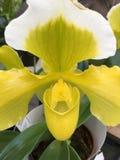 Frauen Schuh, gelbe Blume, gelb Lizenzfreie Stockfotografie