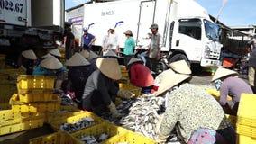 Frauen sortieren frische Fische am traditionellen Fischerdorf stock footage