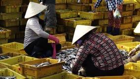 Frauen sortieren frische Fische am traditionellen Fischerdorf von langem Hai, Ba Ria - Vung Tau, Vietnam stock footage