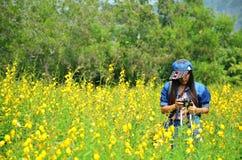 Frauen-thailändisches Porträt auf Crotalaria juncea Feld an der Landschaft Nakornratchasrima Lizenzfreies Stockfoto