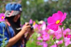 Frauen-thailändisches Porträt auf Kosmos-Blumen-Feld an der Landschaft Nakornratchasrima Thailand Stockfotografie