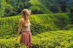 Frauen touristisch an einer Teeplantage Natürlicher vorgewählter, frischer Tee L stockbilder