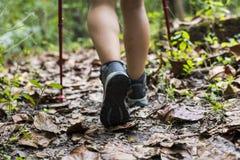 Frauen-Trekking in einem Wald lizenzfreies stockbild