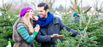 Frauen-und Mann kaufender Weihnachtsbaum auf Markt Stockbilder