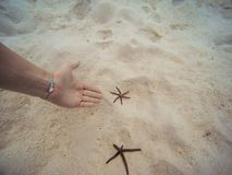 Frauen-Vertretung mit ihrer Hand ein Starfish Unterwasser auf dem Strandufer stockfotografie