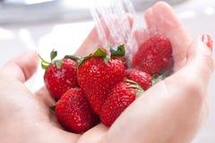 Frauen-waschende Erdbeeren Lizenzfreie Stockbilder