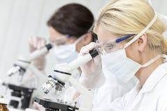 Frauen, wissenschaftlich auf Mikroskopen im Labor Stockfoto