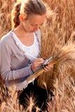 Frauenagronom oder ein Kursteilnehmer, der Weizenohren analysiert Stockbild