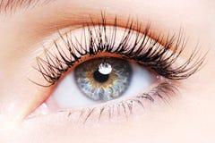 Frauenauge mit den falschen Wimpern einer Rotation lizenzfreie stockfotografie