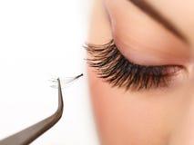 Frauenauge mit den langen Wimpern. Wimpererweiterung Lizenzfreie Stockfotografie