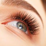 Frauenauge mit den langen Wimpern. Wimpererweiterung Stockfotos