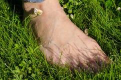 Frauenbein des bloßen Fußes im taunassen Morgenrasen Stockfotos