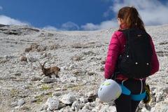 Frauenbergsteiger und -steinbock in den Dolomit stockfotos