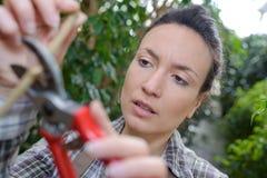 Frauenbeschneidungsmagnolien-Baumbrunchs im Garten Lizenzfreie Stockbilder