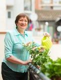Frauenbewässerungsanlagen auf Balkon Lizenzfreie Stockfotos