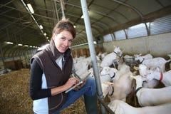 Frauenbrüter in der Scheune unter Verwendung der Tablette Lizenzfreie Stockfotos